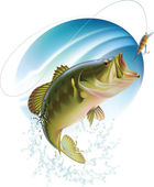 Largemouth bass catching a bite — Stock Vector