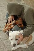 Przybłęda psów — Zdjęcie stockowe