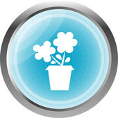 Flower web buttons for website or app — Stock Photo