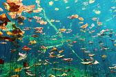 Cenotes debaixo d'água — Foto Stock