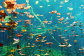 Cenotes underwater — Stock Photo
