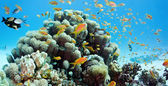 Coral reef scene - panorama — Stock Photo