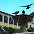 Foto Stock: Pigeons in fountain