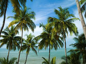 Palms on Goa — Stock Photo