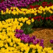 Flowers tulips — Stock Photo #25891773