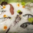 Raw fish — Stock Photo