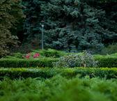 Feuillage dans le parc — Photo