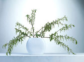 Willow twigs in a vase — Stockfoto