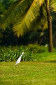 Bird on Goa  — Stock Photo