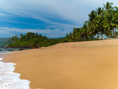 Beach with palm trees — Stock Photo
