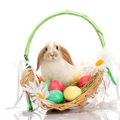 Easter Bunny sitting in basket — Stockfoto