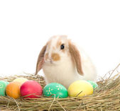 Easter Bunny is sitting near the colorful eggs — Foto Stock