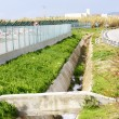 Irrigation ditch — Stock Photo