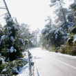 Stock Photo: Snowfall in Collserola