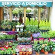 Showcase of florist — Foto de Stock
