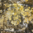 Lichens and microscopic organisms — Stock Photo