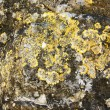 Stock Photo: Lichens and microscopic organisms