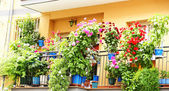 Facade with balconies and flower pots — Stock Photo