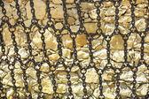 Detail gateway to the wineries Güell, Gaudí Garraf, Barcelona — Stock Photo