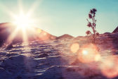 Solar flare on snowy slopes — Stock Photo
