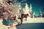 Horse and sleigh in the Ukrainian Carpathians — Stock Photo