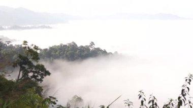 Beautiful timelaps floating fog landscape in rain — Stock Video