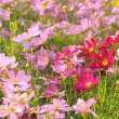 Photo: Field of colorful flowers in garden.