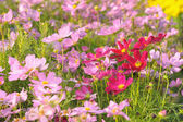 Field of colorful flowers in the garden. — Stock Photo