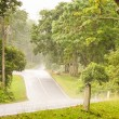 Road in rainforest. — Stock Photo