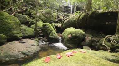Dolly: Beautiful waterfall in tropical forest, Thailand., HD 1080P. — Stock Video