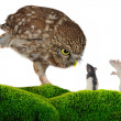 Owl and rat — Stock Photo #12483575