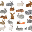 Rabbits — Stock Photo #12483594