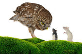 Owl and rat — Stock Photo