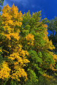 Paysage d'automne — Photo