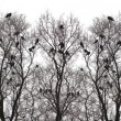Silhouette of a crow on a tree — Stock Photo