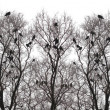 Stock Photo: Silhouette of a crow on a tree