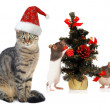 Christmas Santa cat and rat — Stock Photo
