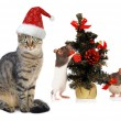 Christmas Santa cat and rat - Stock Photo