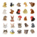Animals and birds — Stock Photo #20995247