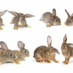 Grey rabbit — Stock Photo #22032991