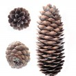Cones — Stock Photo #24030997