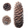 Cones - Stock Photo
