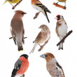 Stock Photo: Birds