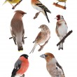 Birds — Stock Photo