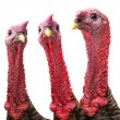Turkey — Stock Photo #29509937