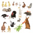 Animals — Stockfoto