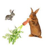 Rabbit — Stockfoto