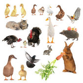 Animals — Stock Photo
