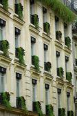 Tree growing on a balcony — Stock Photo