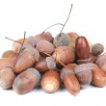 Pile of acorns — Stock Photo